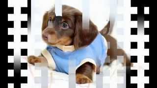 вязание одежды для собак крючком