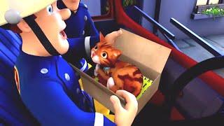 Feuerwehrmann Sam Deutsch Neue Folgen 🔥 Sam und das Team - Katze Rettung 🚒 Zeichentrick für Kinder
