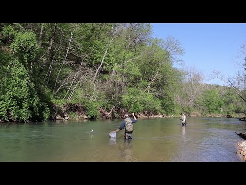 MISSOURI OZARK MOUNTAINS: SUCH A GREAT RIVER!! (Fly Fishing Little Piney & Lane Springs, Rolla MO)