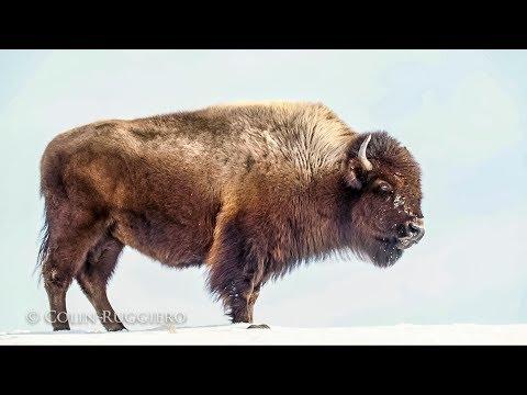 Chasing Light - Bits:  Yellowstone Winter II