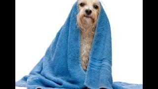 Оформление ветеринарных документов кастрация самок Мариуполь стрижка собак цена(Оформление ветеринарных документов кастрация самок Мариуполь стрижка собак цена., 2015-11-26T07:48:53.000Z)