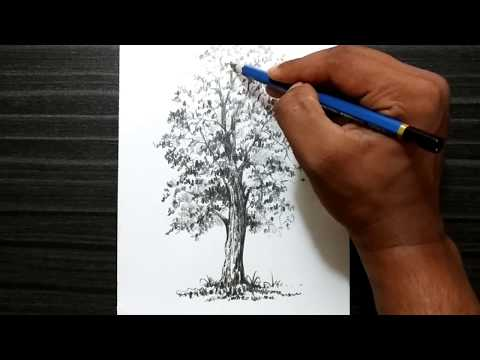 How To Draw A Tree Easy Steps For Children | Beginners | Tree Sketch thumbnail