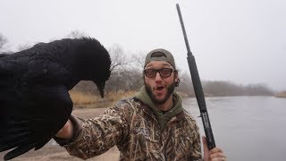 crow-hunting-for-the-first-time