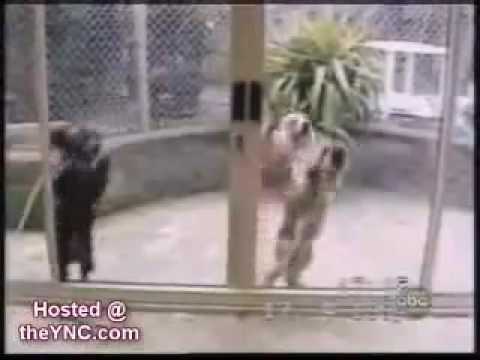 clip vui về chó -- Video Clip Hài.flv
