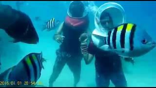 Video Deep sea walk,Andaman Nicobar- 2017 download MP3, 3GP, MP4, WEBM, AVI, FLV September 2017