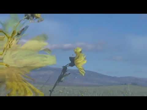 MARK KNOPFLER new HILL FARMER`S BLUES with Lyrics