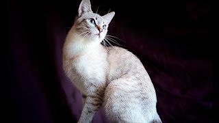 Бутик редких кошек