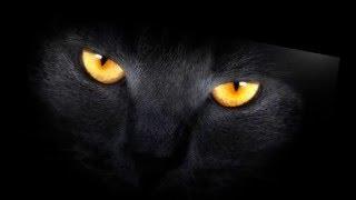 народные приметы,черная кошка