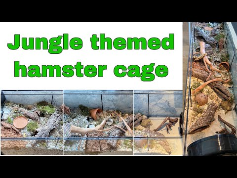 jungle-themed-hamster-cage-tour- -natural-detolf-settup- -german-inspired