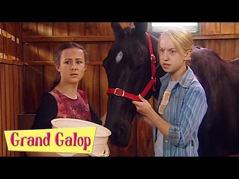 Grand Galop - Drew, Reviens et Le secret de Chelsea | Grand Galop Saison 2