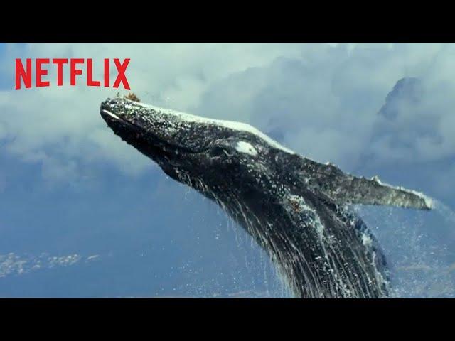 Gezegenimiz | Genişletilmiş Resmi Fragman [HD] | Netflix