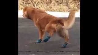 Сломал пса [ ВидеоПриколы#1 ]