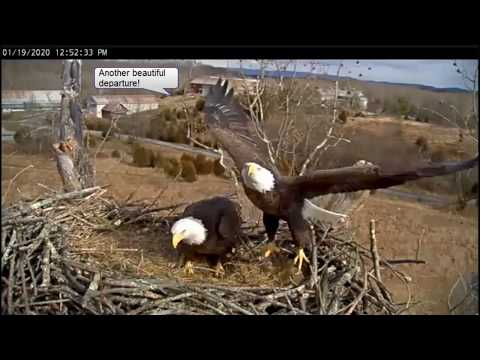 Windy Conditions - Bella & Smitty - Stick Deliveries - January 19 2020 - NCTC Bald Eagles