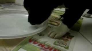I Primi Minuti Di Mafia A Casa ( Dei Nonni!)  Staffordshire Bull Terrier - Staffy Puppy