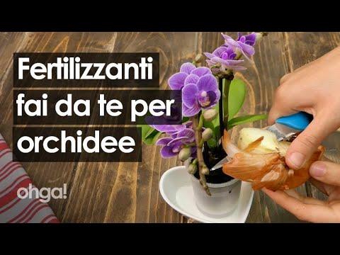 Download Fertilizzante per orchidee: 3 preparazioni casalinghe per far fiorire la tua orchidea