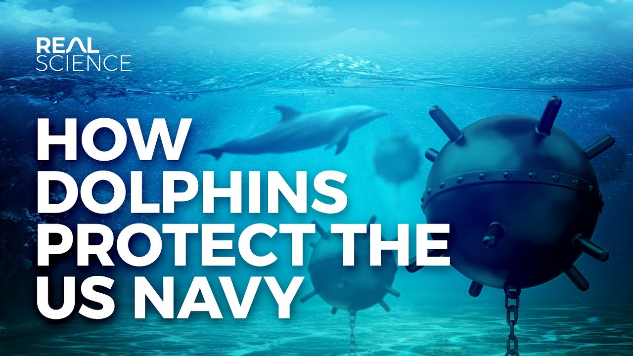 How Dolphins Protect the U.S. Navy