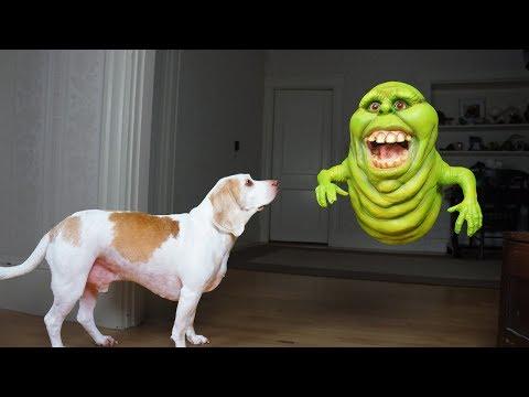 Funny Dogs vs Slimer Prank: Funny Dogs Maymo & Potpie