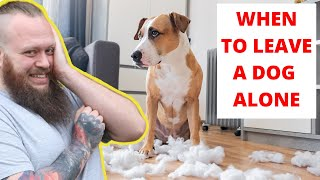 How To Leave Your Puppy Or Dog Home Alone