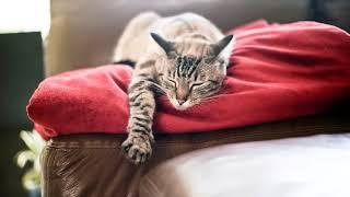 Как вывести запах кошачьей мочи с дивана в домашних условиях отзывы