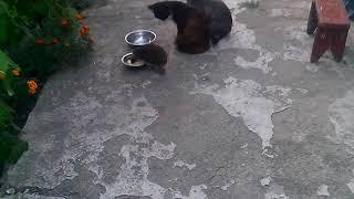 Еж приходит кушать,кот в шоке!