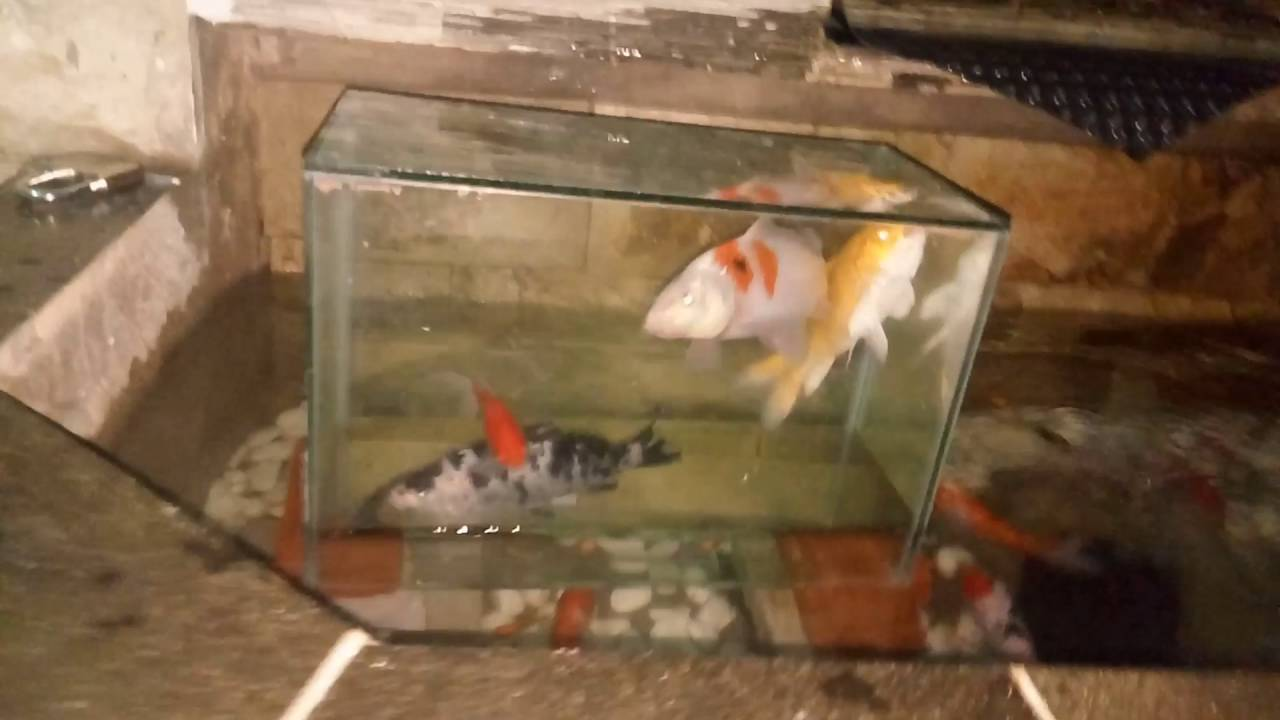 6600 Koleksi Gambar Kolam Ikan Keren HD