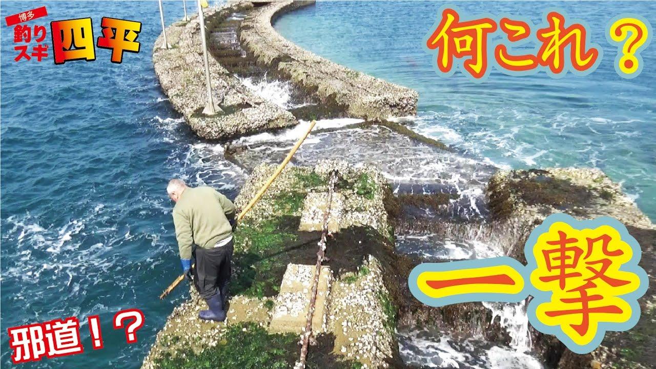 釣り スギ 四平 堤防