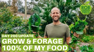 Growing and Foraging 100% of My Food - Day 200 Update