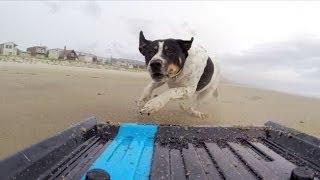 GoPro: Dog vs. Mini Truck
