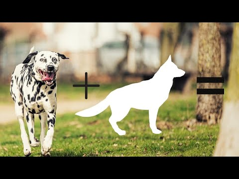 Top 10 dalmatian cross breeds | Hybrid dogs | Mix breeds