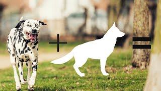 Top 10 dalmatian cross breeds | Hybrid dogs | Mix breeds