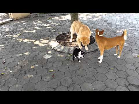 the dog play together with Mira the cat and her kitten
