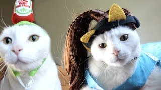 CAT TRIES ON HALLOWEEN COSTUMES