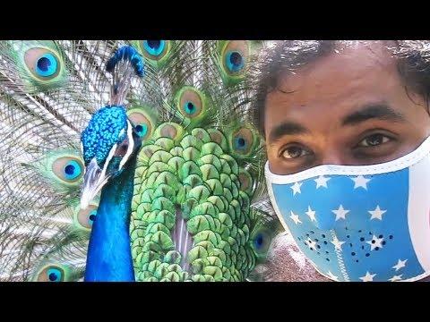 PEACOCK SO CLOSE!   BALI BIRD PARK part 2   Bali Episode 7