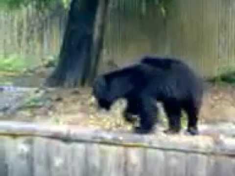 The Bear,Alipore Zoological Garden,Kolkata,India
