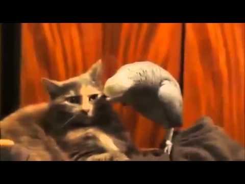 Скачать Видео С Говорящим Попугаем