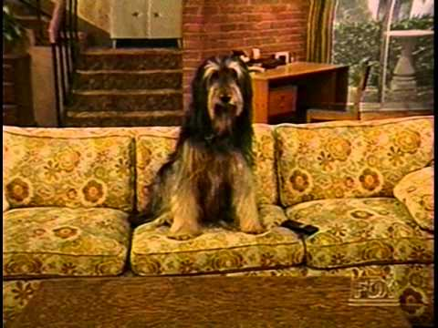 married with children dog