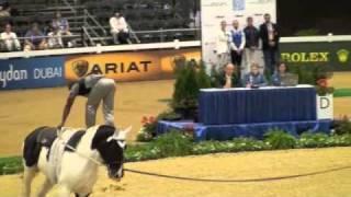 Popular Videos - 2010 FEI World Equestrian Games & English riding