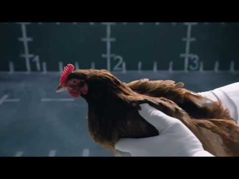 Jaguar vs Chicken – Reply ad to Mercedes – Funny commercial