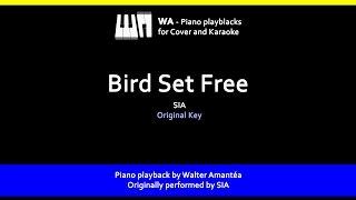 Bird Set Free - SIA - Playback for Cover / Karaoke