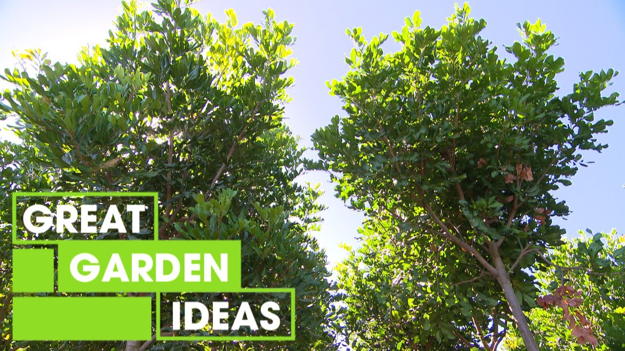 Tree planting 101 | GARDEN | Great Home Ideas - YouTube