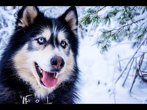 11 Dogs With Absolutely Breathtaking Eyes | Beautiful Animals