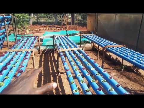 Aquaponic System in Africa