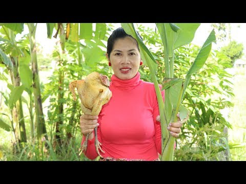Awesome Cooking Banana Tree With Big Chicken Recipe Delicious In My Village – Village Food Factory