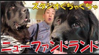 番組提供:ペットライン株式会社 http://www.petline.co.jp/ もふもふ!...