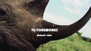 TG-TONEWORKS - Animal's fate