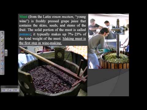 Wine Production (process Of Wine Wine Making)
