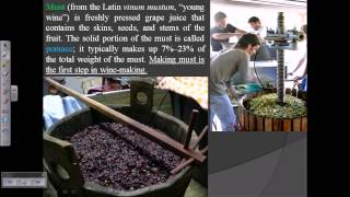Wine production (process of wine wine making)