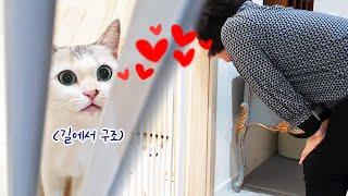 고양이 반대했던 엄마를 사로잡은 애교쟁이 구조냥이♥