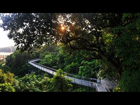 Delhi Ridge Forest   Haunted Place in Delhi   Southern Ridge Forest the  green natural beauty.