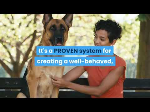 teach-a-dog-to-sit---how-to-teach-your-dog-to-sit-with-positive-reinforcement